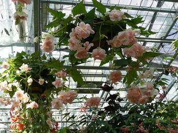 温室の花たち.jpg